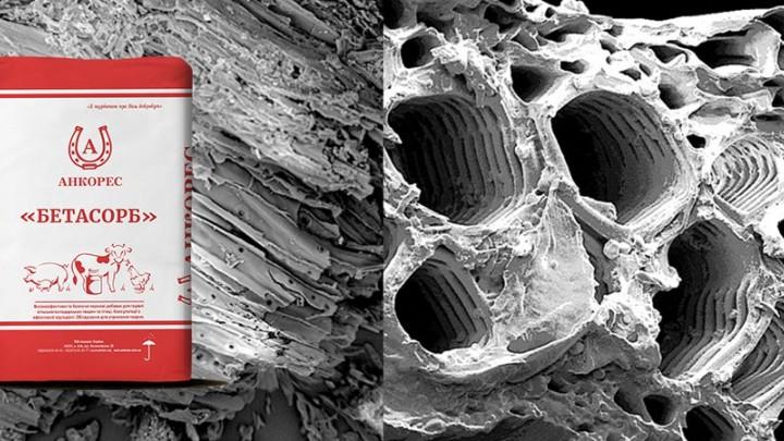 Определение пористой структуры сорбентов, предназначенных для лечения и профилактики токсикозов животных