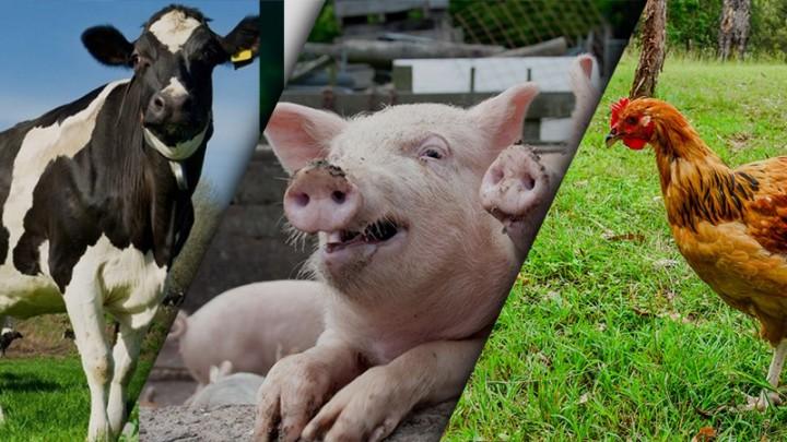Что такое полнорационные комбикорма? Состав полнорационного комбикорма для животных. Особенности использования и применения.