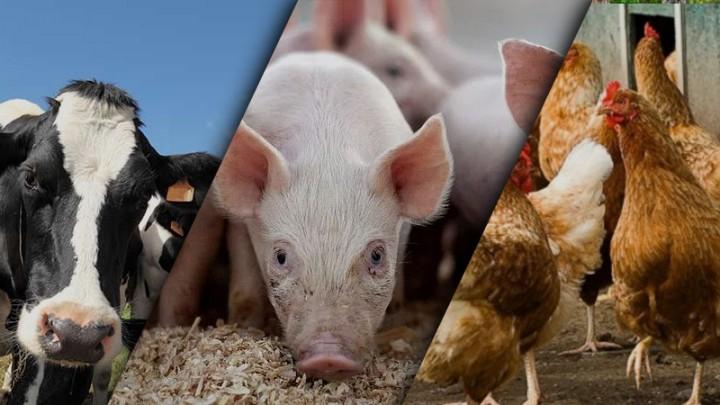 Что такое премиксы? Состав премиксов для животных. Особенности использования и применения.