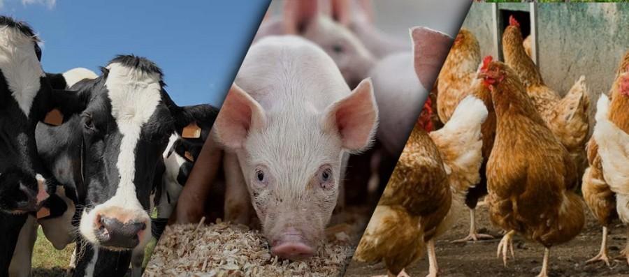 Що таке премікси? Склад преміксів для тварин. Особливості використання та застосування