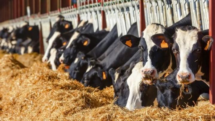 Комфорт животных - залог увеличения продуктивности