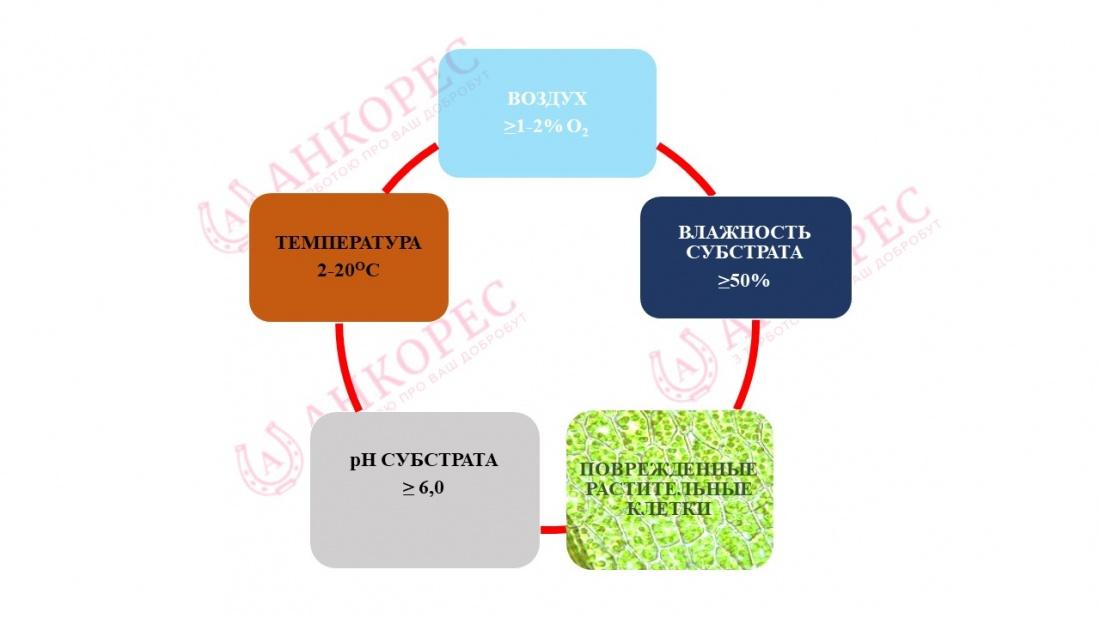 Силос як основне джерело мікотоксинів