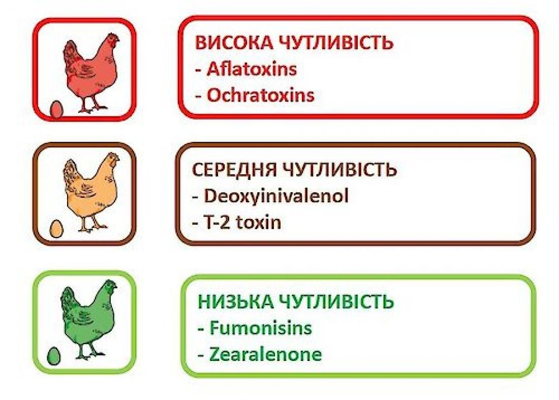 Адсорбенти в птахівництві. Як вибрати сорбент для птиці?